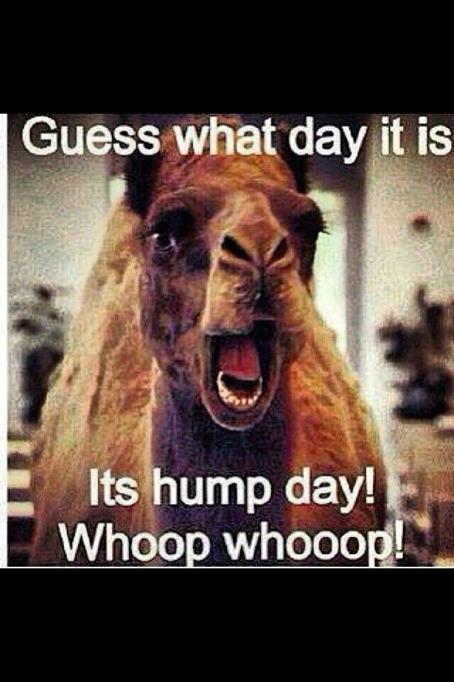 See the Marvelous Funny Animal Hump Day Memes