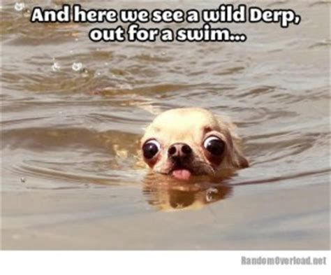 Derp quotes from dogs quotesgram 300x249 Funny pictures philver derp dog