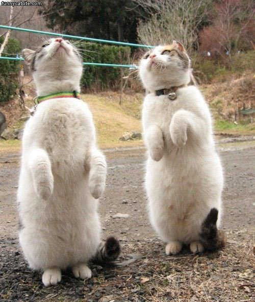 Cats Begging