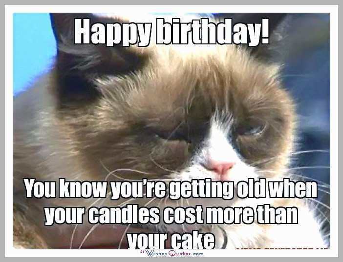 Birthday Meme Cat Pretty Happy Birthday Memes with Funny Cats Dogs and Cute Animals Birthday