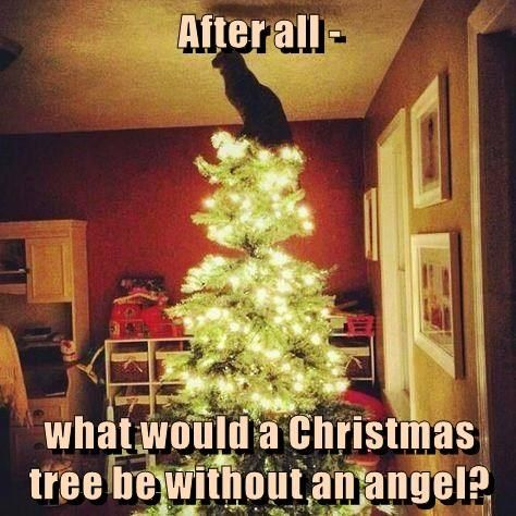 christmas angel cat without would be what caption