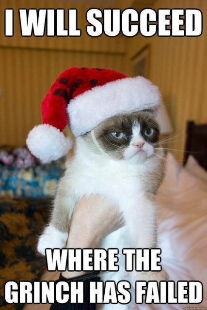 grumpy cat thanksgiving View Full Size More funny cats grumpy cat doesn t like christmas