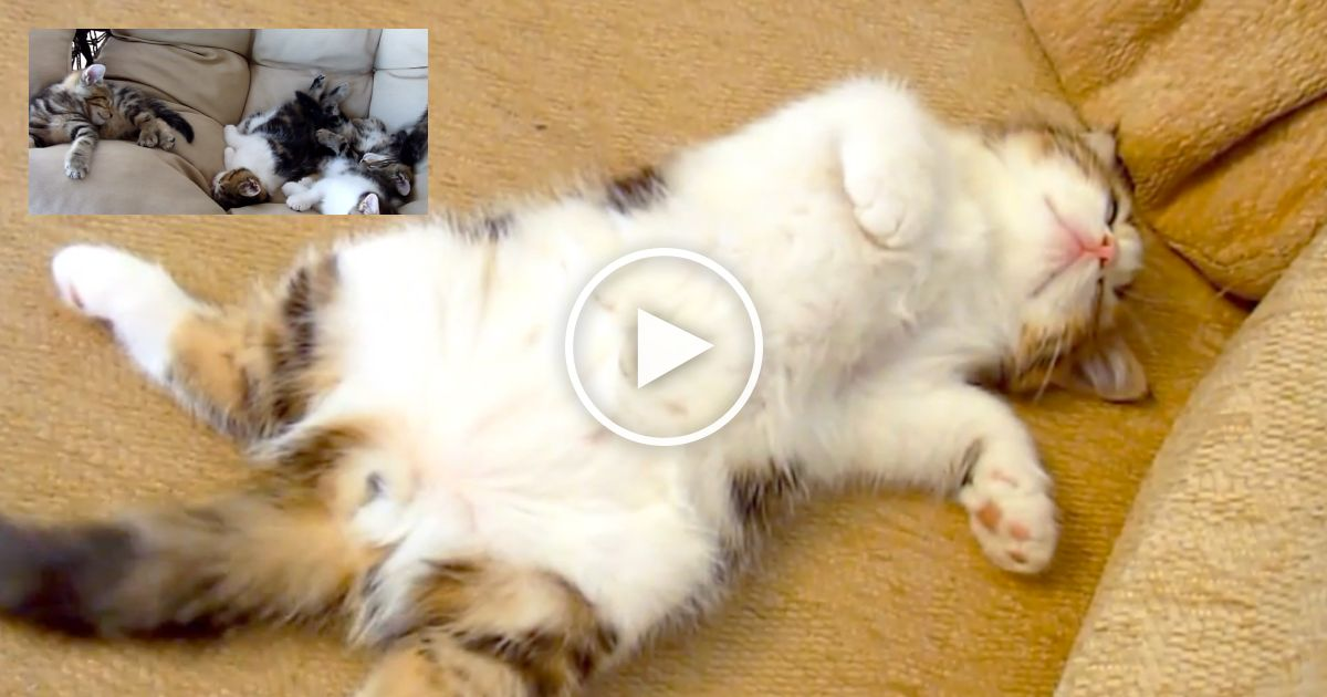 These Funny Cats Sleeping In Weird And Cute Positions Will Make Your Day Just Watch