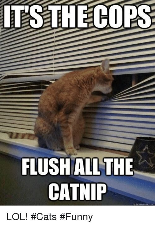 Cats Funny and Lol IT S THECOPS FLUSHALL THE CATNIP quickmeme LOL