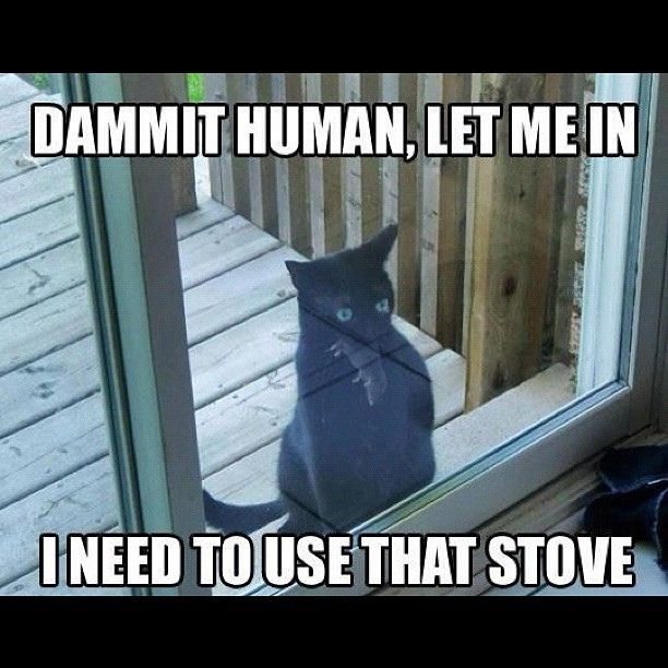 funny cat kitty stove dead rat mouse meme