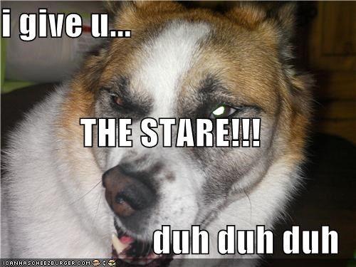 critters derp dogs glare i has it stare