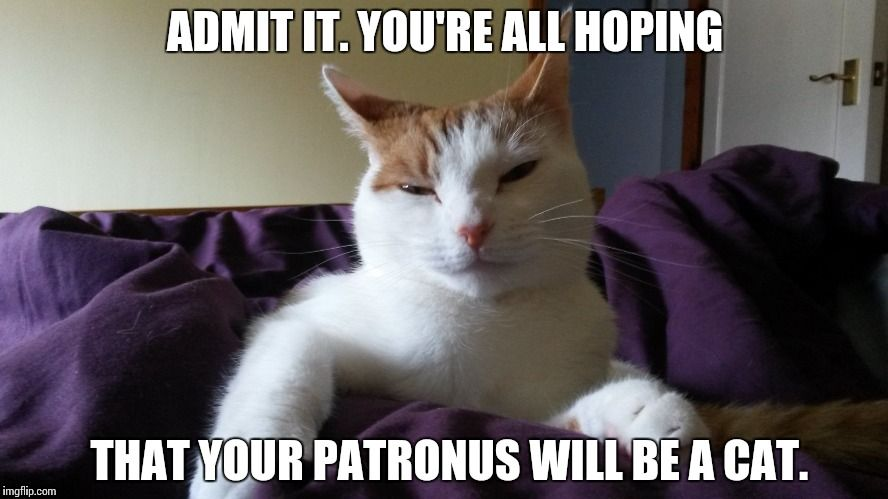 You re all hoping that your Patronus will be a cat