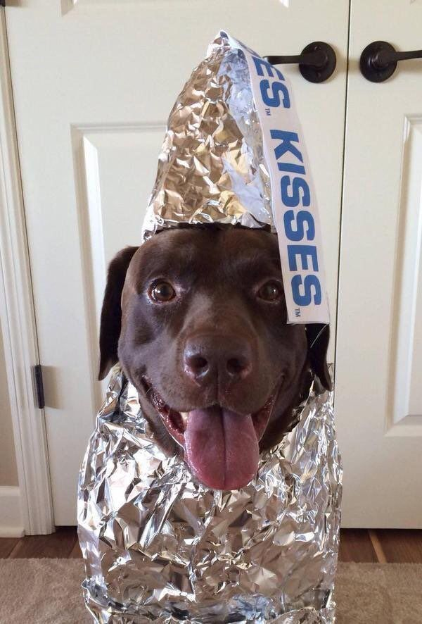 Upvote a Chocolate Kiss Album on Imgur Big Dog Halloween Costumes Puppy Costume