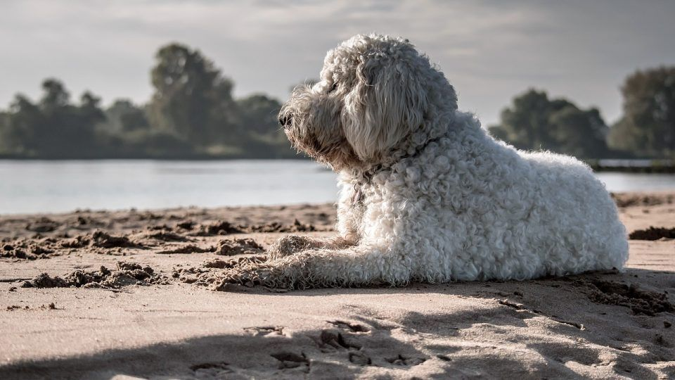 How Much Do Dogs Really Remember