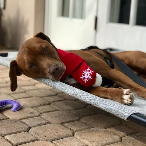 Maybe you would like to be Maxwell s super Santa and give him the Christmas present of bringing him home If so click here to read more about Maxwell or