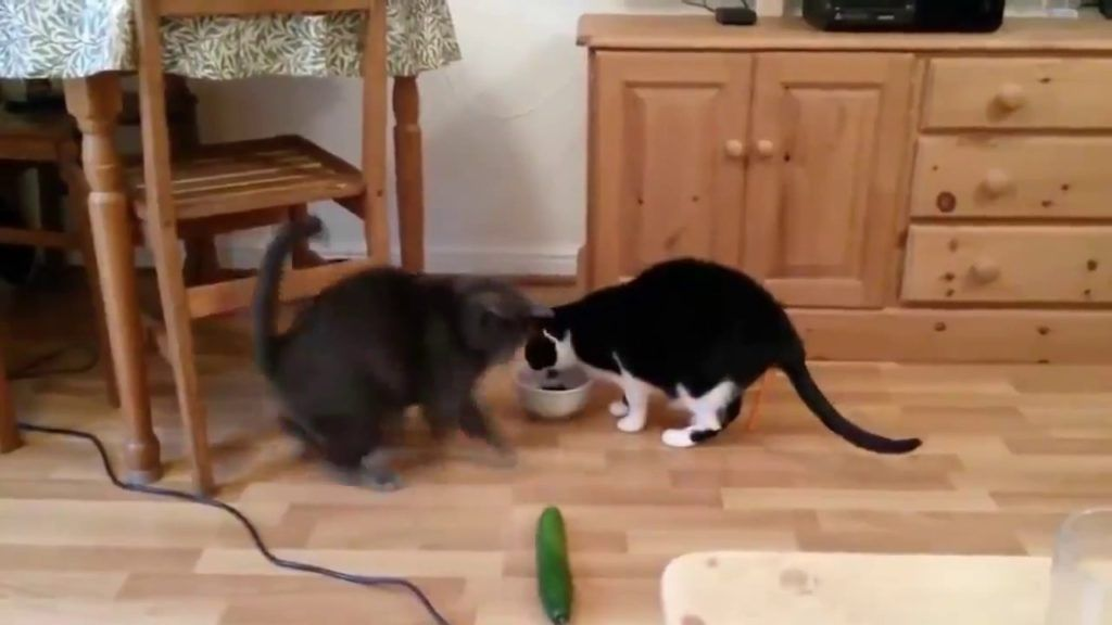 See the New Cat Funny Pictures Video