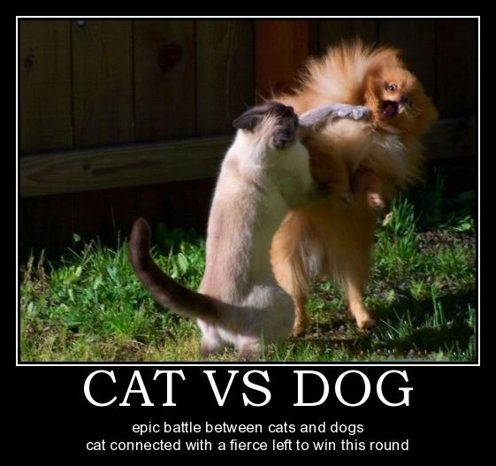 25 more funny dog and cat demotivational signs