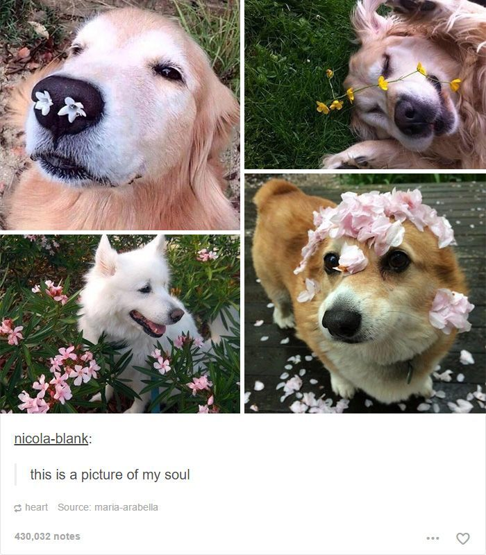 15 Dog Posts Tumblr That Are Impossible To Get Through Without Smiling