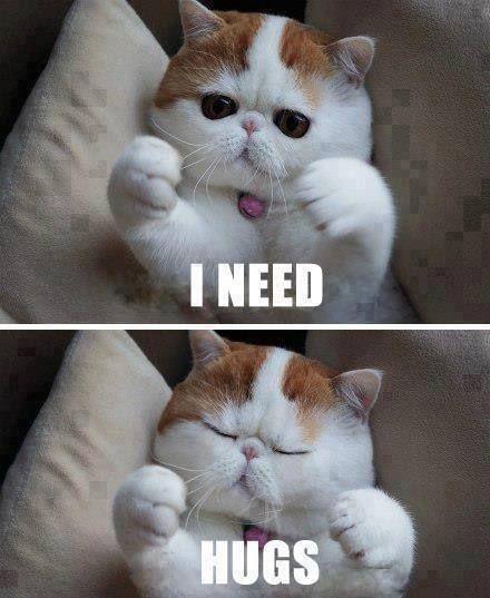 I need hugs cats animals