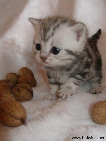 Humorous animals Animal Child Cute Kitty Child Kittens Nut Child Animal Cutest Kitten Humorous Animal Child Kitty Child Cat