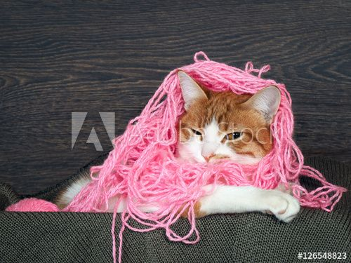 Funny cat with matted pink thread on the head as hair