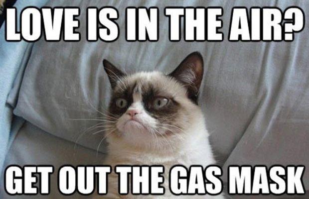 Perhaps another Grumpy Cat