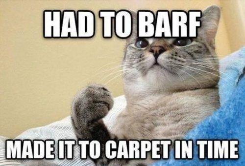 Top 40 Funny Cat Memes Funny cats