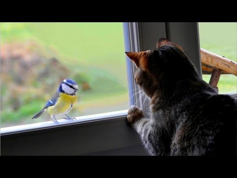 Weird cats making terrifying sounds while talking to birds Funny cat pilation
