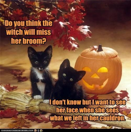 See the New Funny Happy Halloween Pictures Cat