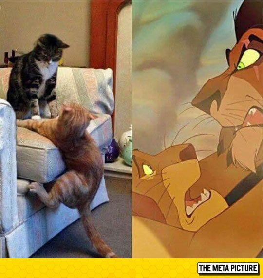 Scar And Mufasa In Real Life