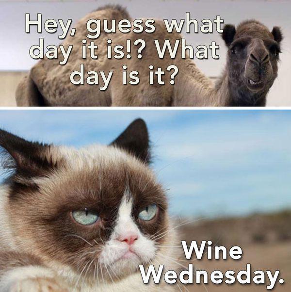 It s ly Wednesday Meme Funny Cat Wednesday Meme