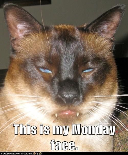 This is my Monday face Winner of the Anderson Live National Cat Day contest