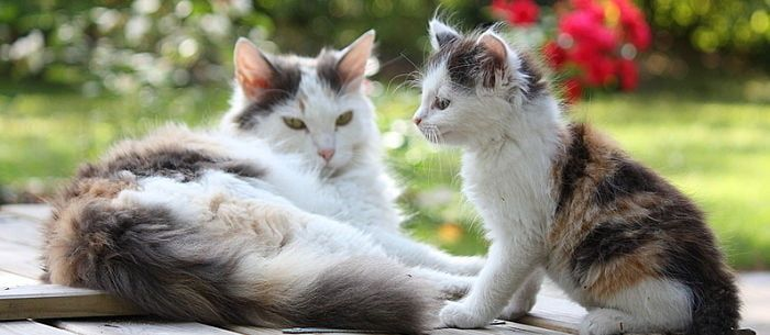 It can happen to the best pet parents Your indoor cat slips outside and now you re wondering if she s expecting kittens If she isn t fixed