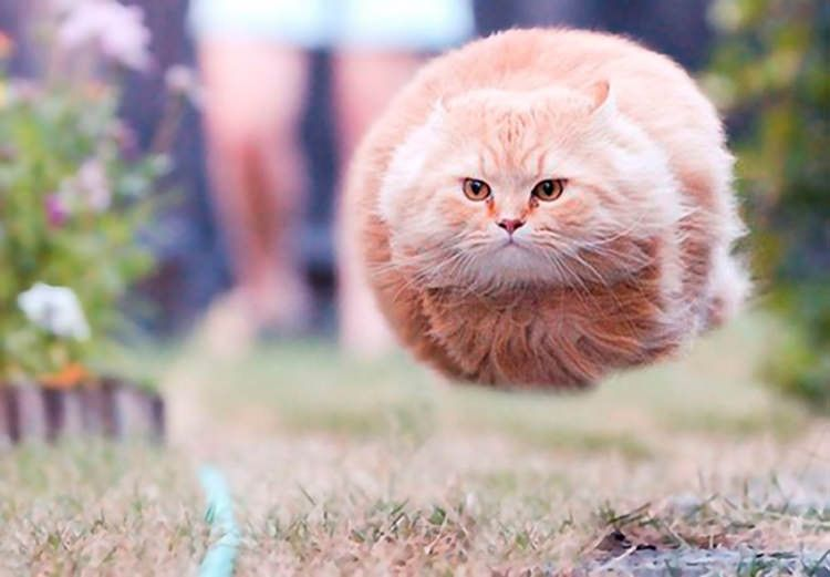 1 funny cat pictures