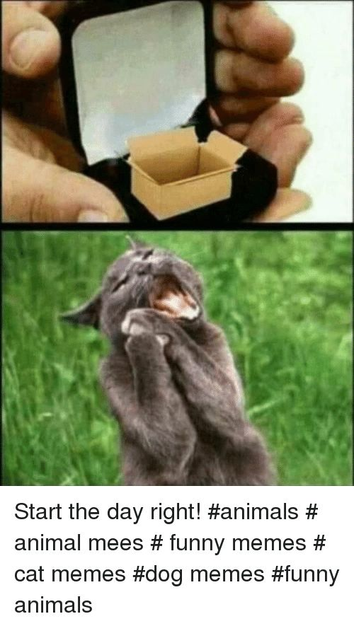Animals Funny and Funny Animals Start the day right animals