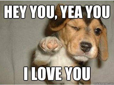 See the Prodigious Funny Dog Memes Marketing