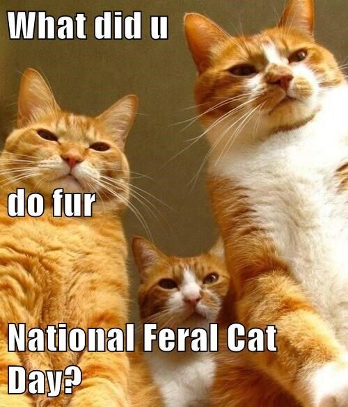 See the Prodigious Funny Feral Cat Memes