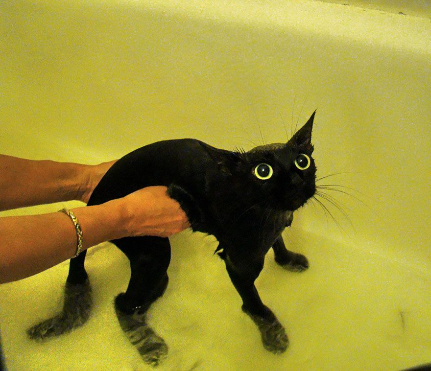 funny wet cats 14
