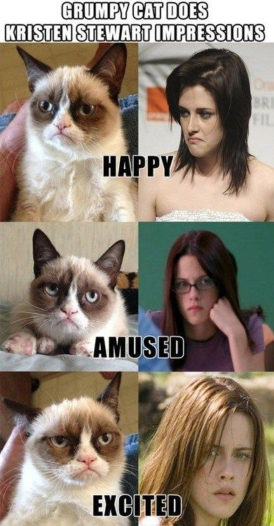 kristen stewart actor meme Grumpy Cat tard Cats funny animals expressions Memes