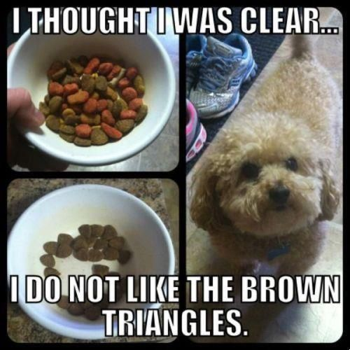 Just got my dog some new dog food and she does this except doesn t leave it in her bowl she spits it out on the floor dead serious its so funny and messy
