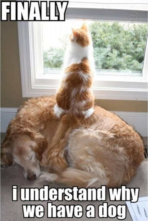 Funny dog and cat picture humor Pinterest