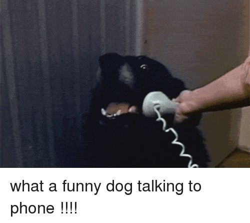 Funny Gif and Hello G what a funny dog talking to phone