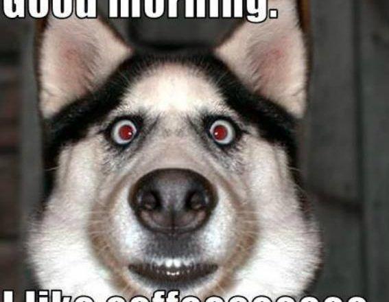 Elegant New Dog Meme Lovely 0d Morning Fuckers Wwwalex In Wonderlanddog Memes