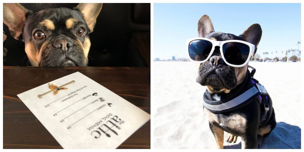 Most dog friendly cities in US American cities that are dog friendly dog friendly