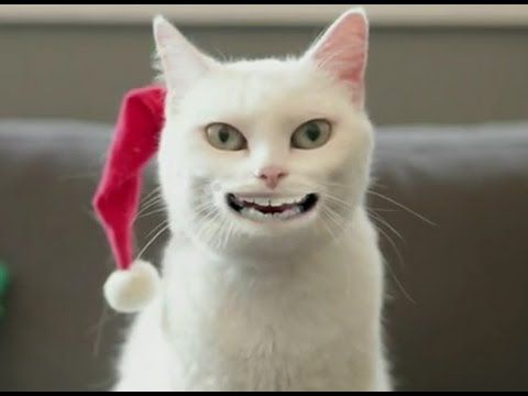 Funny Christmas Cat s 03