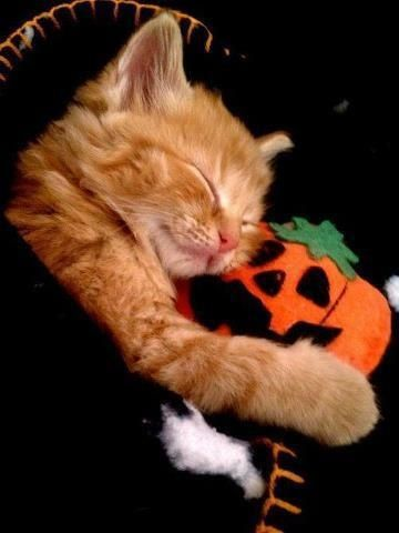 101 Cats Snuggling With Stuffed Animals ANIMALS Pinterest