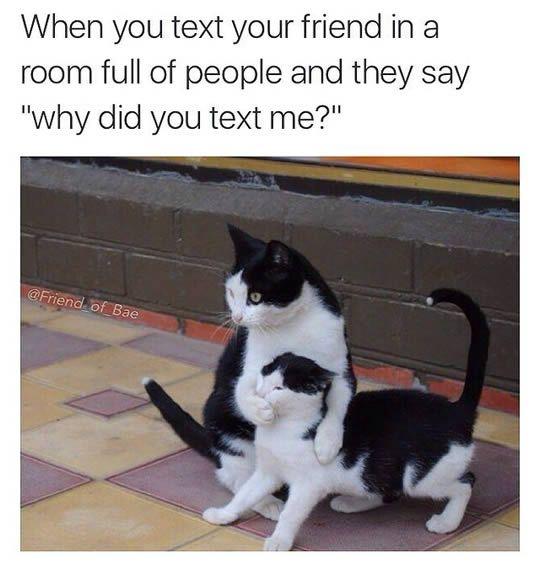 funny cat memes today 10 pics