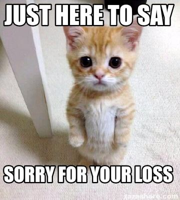 Cute Sad Cat Meme meme generator Just here to say Sorry for your loss