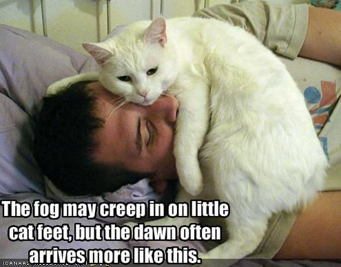 Funny cat pictures with captions 2012 Style No 2