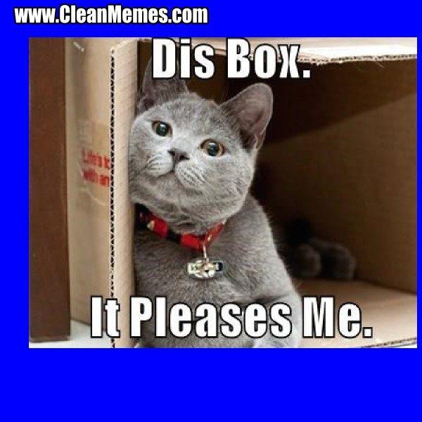Funny Clean Cat Memes of instagram
