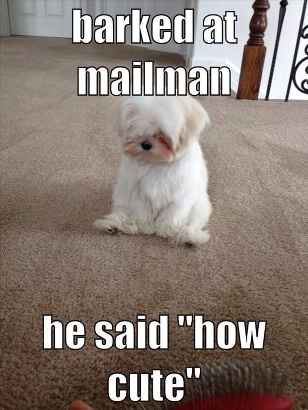 That s how I feel when I threaten people It s because I m short I know Aww Funny Animal Quotes