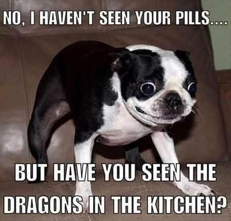dogmemes pillmemes memes dragon dog dankmemes memes meme