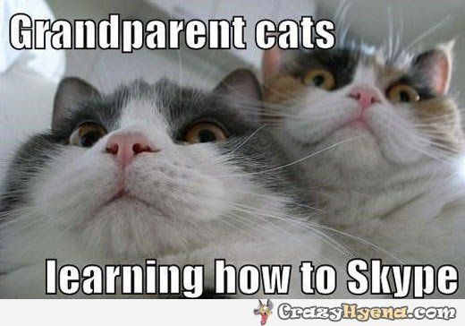 Pics s Funny Dancing Fat Cat Funny Fat Cats Dancing Tridanim