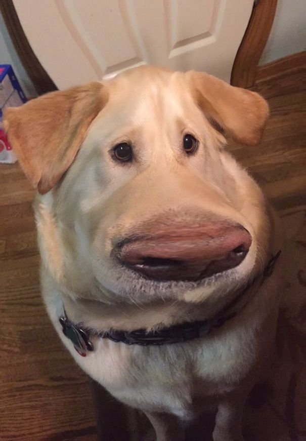 32 My Dog Looks Like Dug From Up With This Snapchat Filter