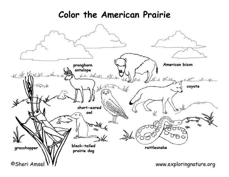 The American Prairie coloring page